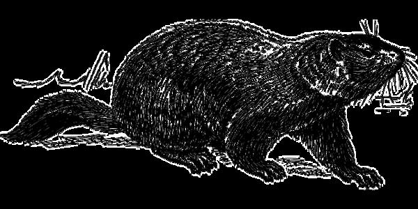 Groundhog Day Reading Passage (Grade 3)